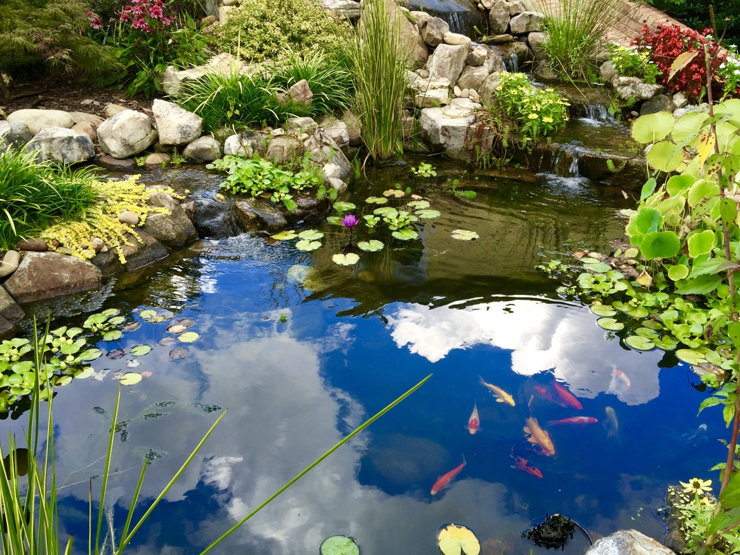 fish koi pond builder installer alpharetta johnscreek duluth